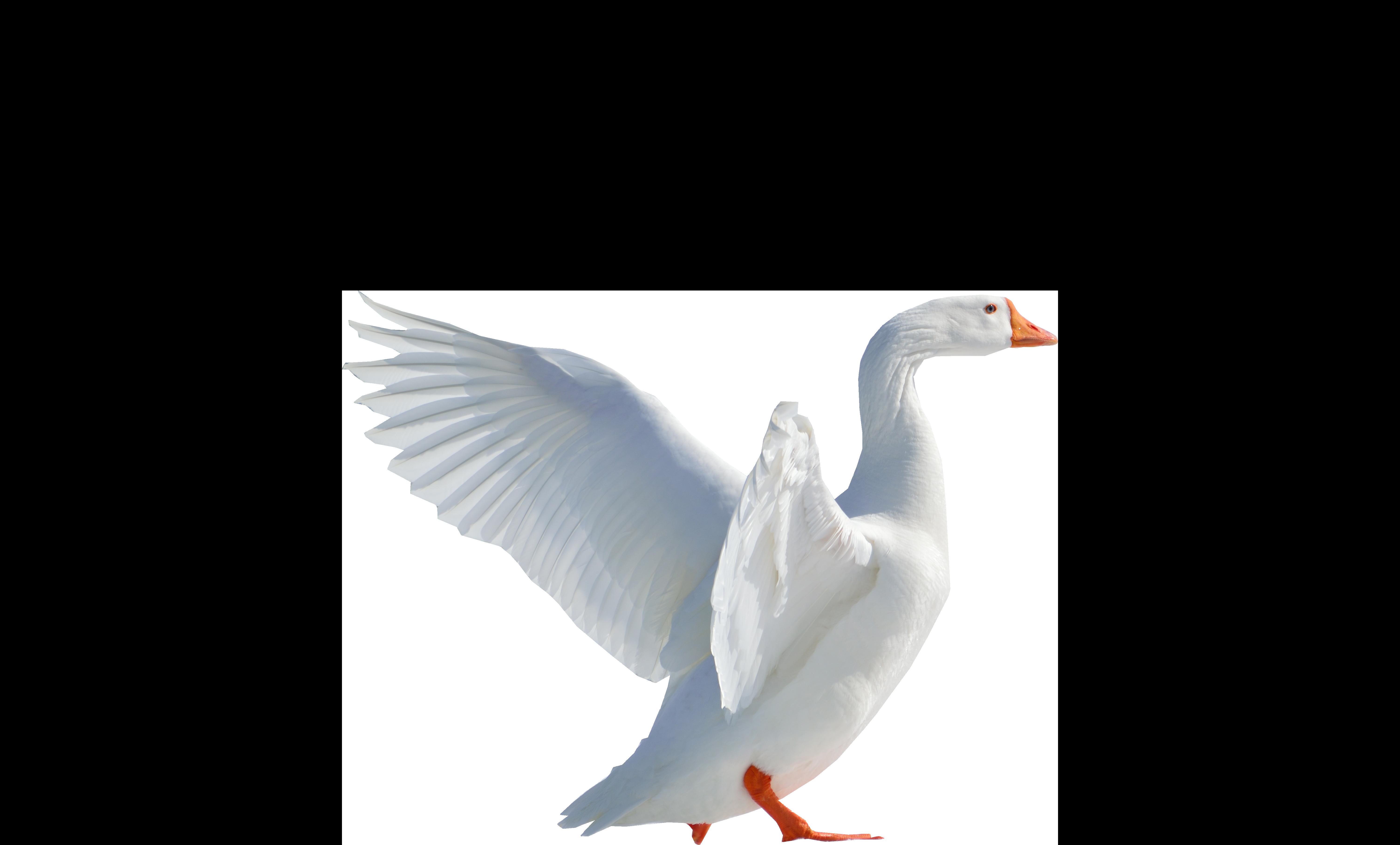 goose flying png image purepng free transparent cc0 flying bird clipart gif bird flying clipart