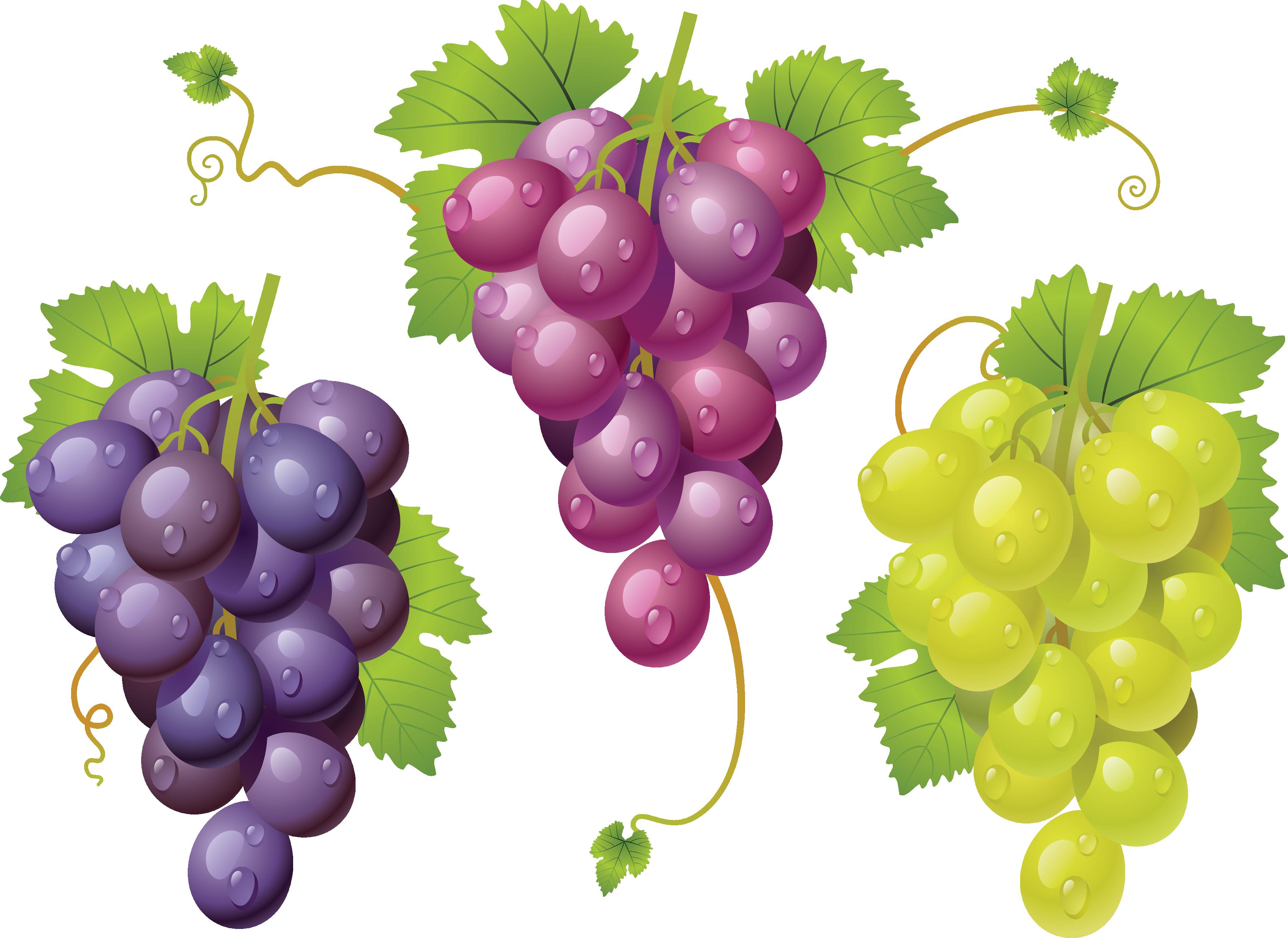 Grapes variations PNG Image