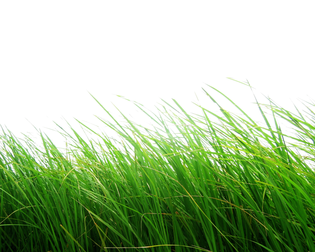 Grass PNG Image - PurePNG | Free transparent CC0 PNG Image ...