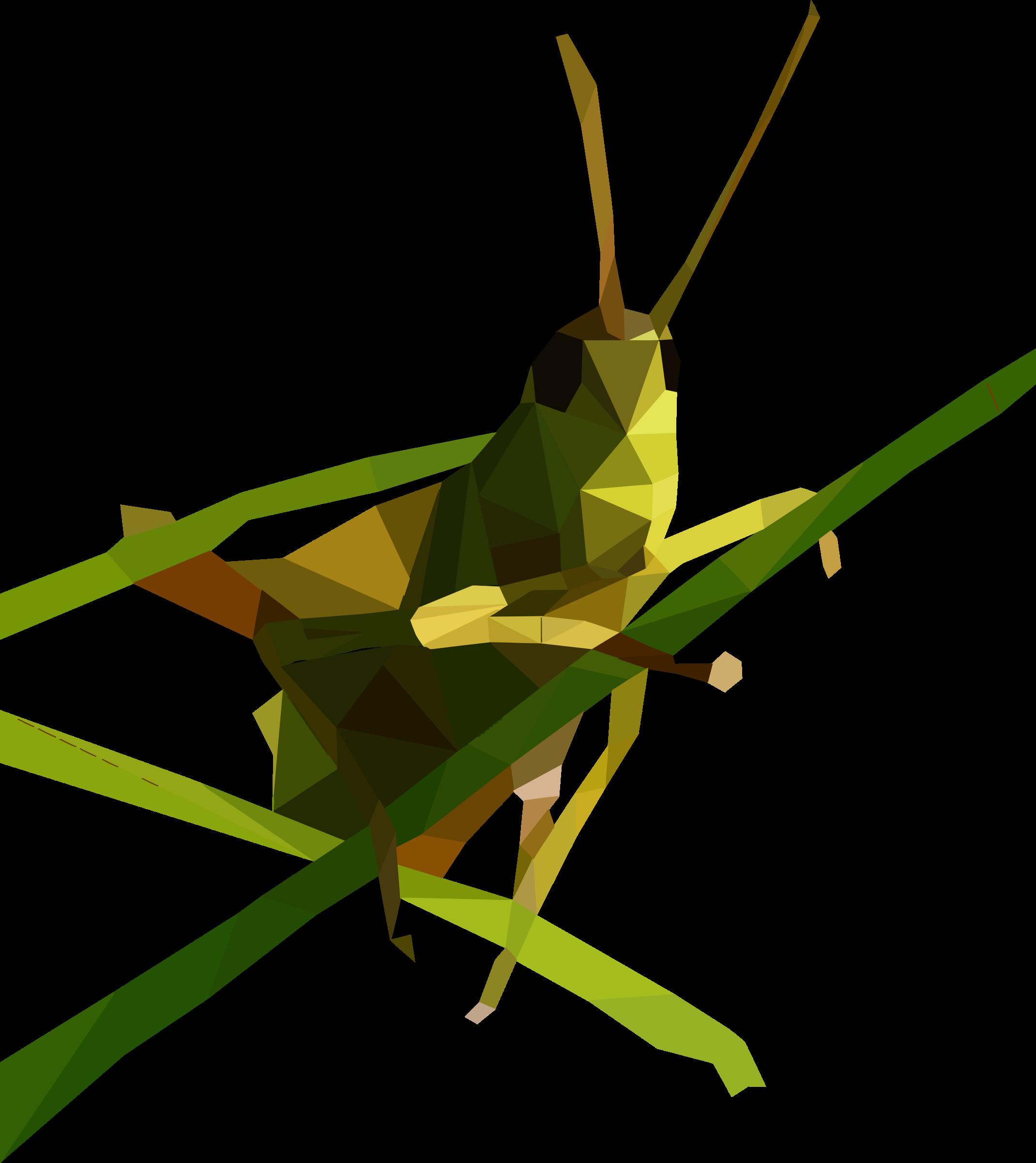 Grasshopper PNG Image