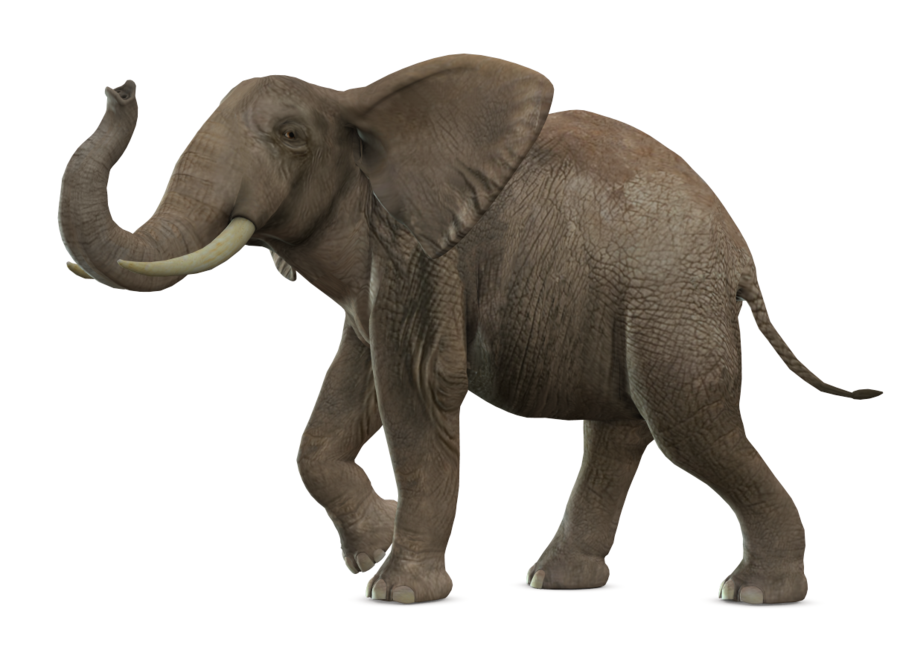 Gray Elephant Standing PNG Image