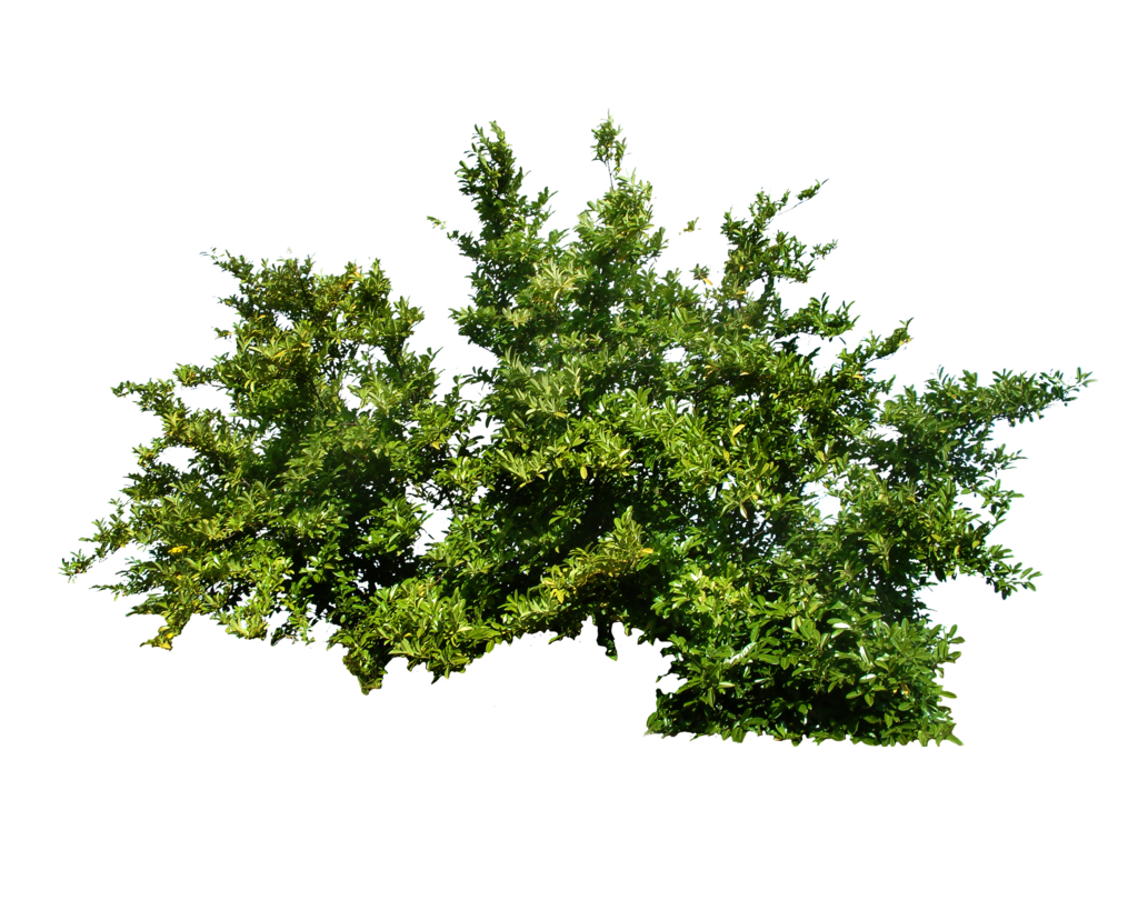Green Bush PNG Image