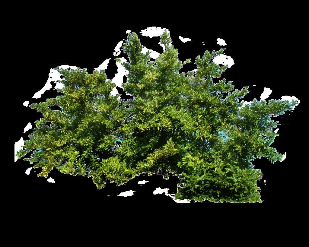 Green Bush PNG Image