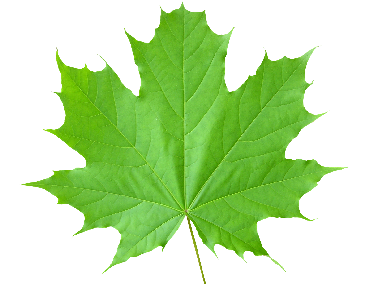 green leaves png image purepng free transparent cc0 png image