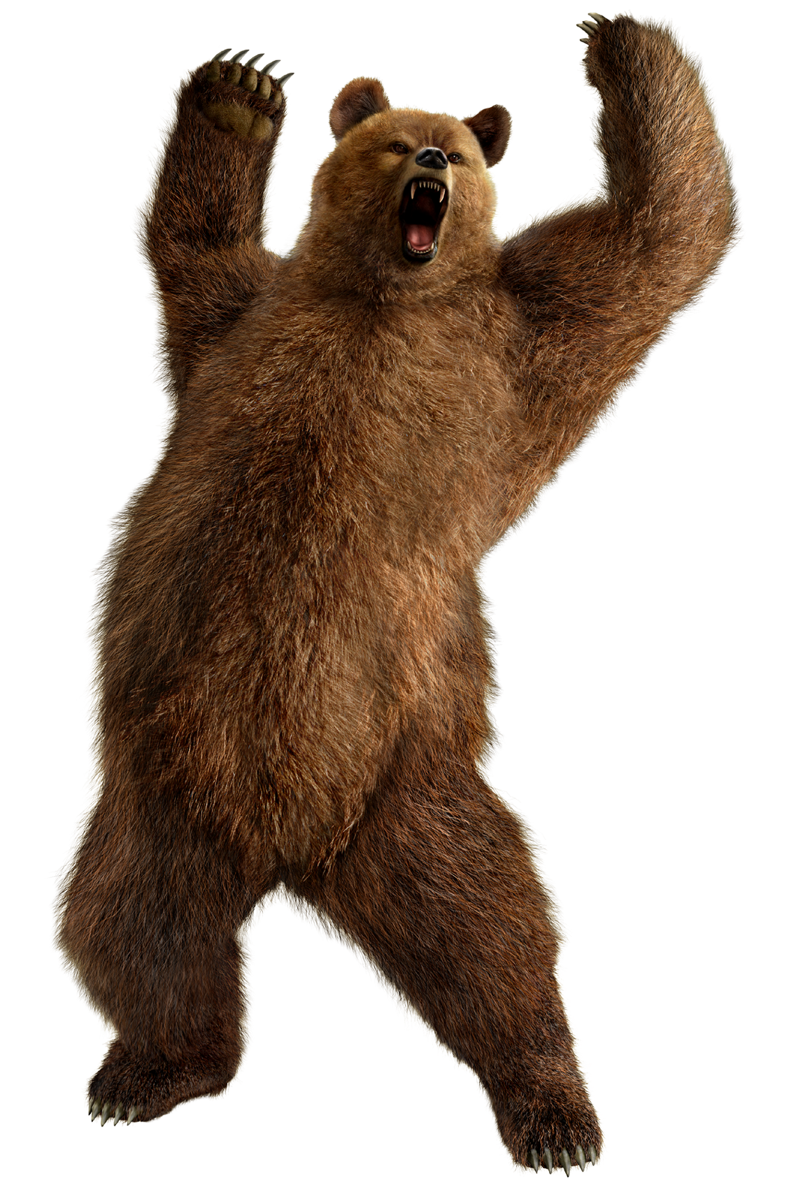 Grizzly Bear Standing Png Image Purepng Free