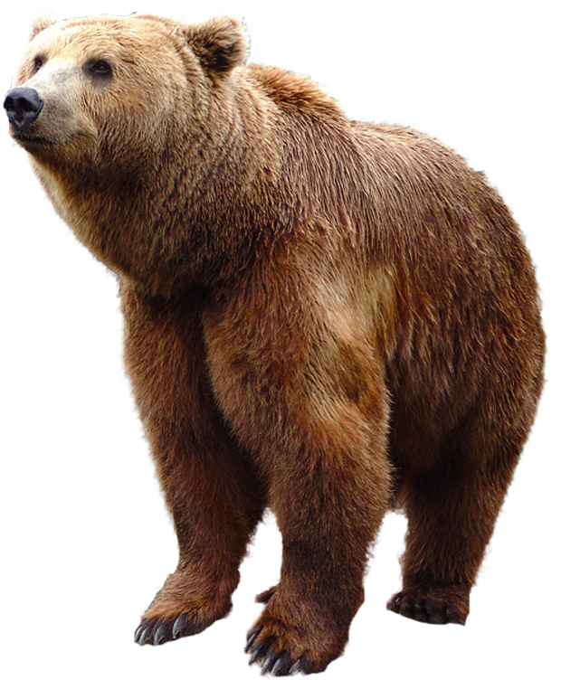 Grizzly Bear Standing PNG Image