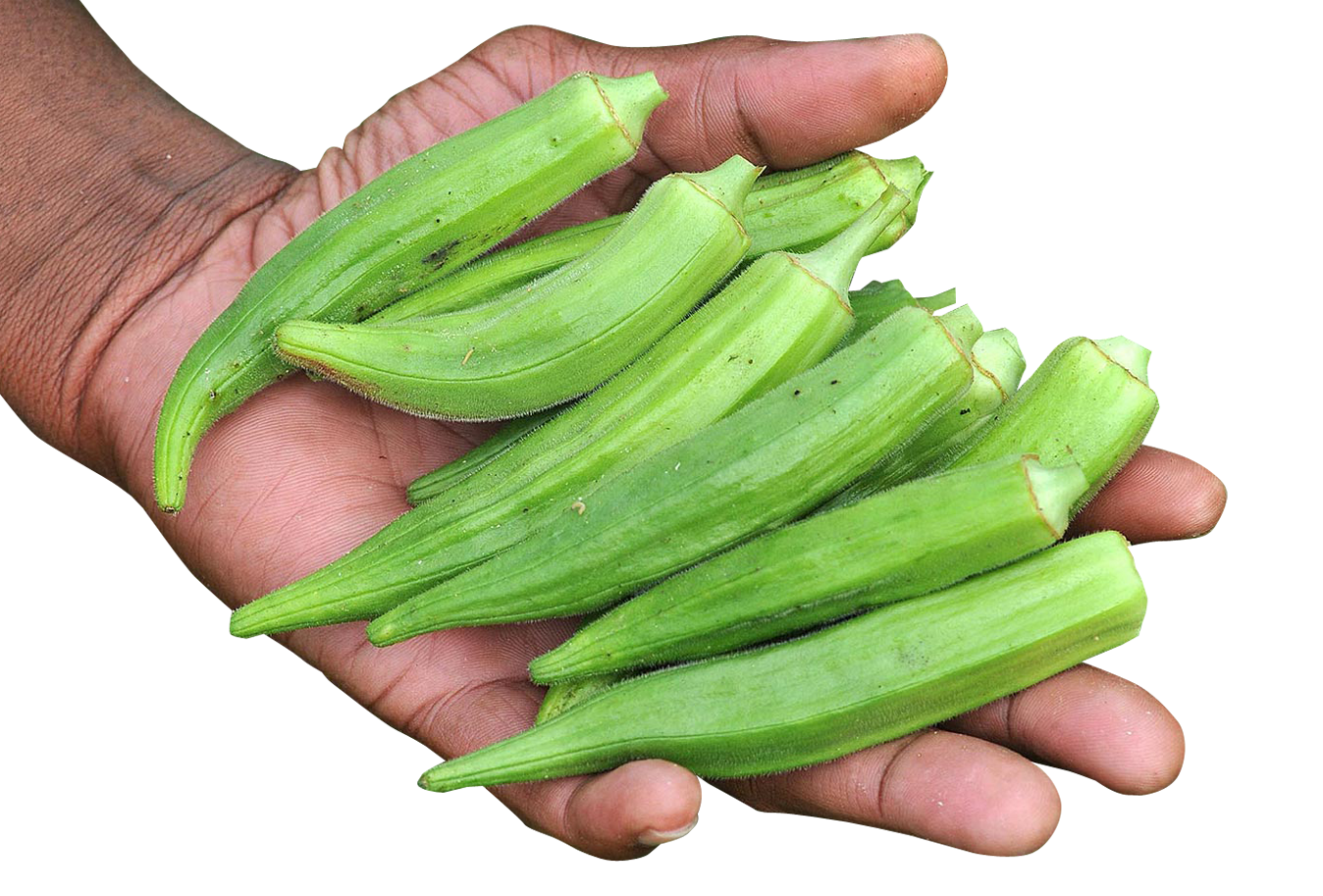 Hand with Okra PNG Image