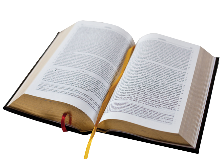 An open book with blank white pages Download high resolution JPG file Empty book template for your content text and images