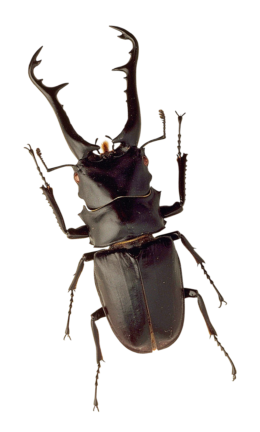 Insect PNG Image