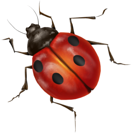 ladybug png image purepng free transparent cc0 png clip art dragonfly outline only clip art dragonfly free