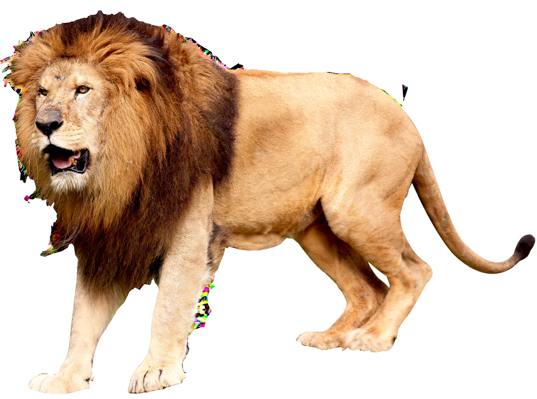 Image Of A Roaring Lion Dowload: Free Transparent CC0 PNG Image