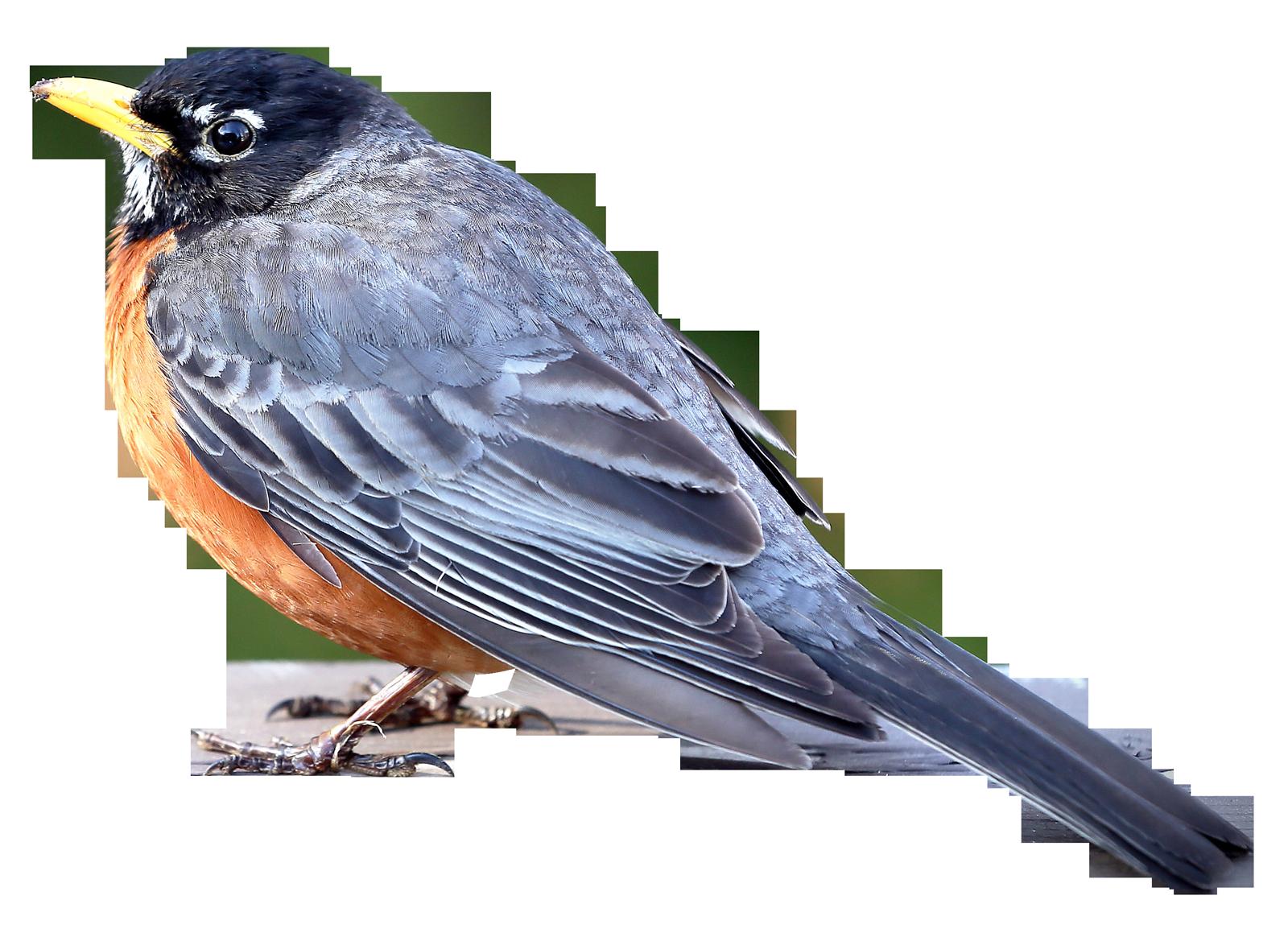 Merle Bird