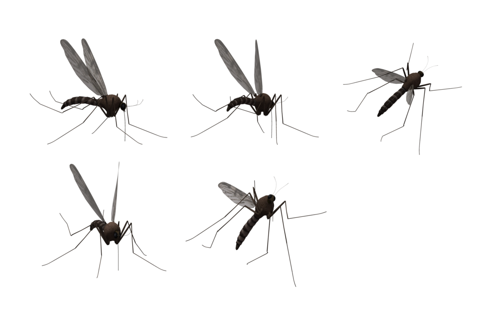 Mosquito Png Image Purepng Free Transparent Cc0 Png Image Library