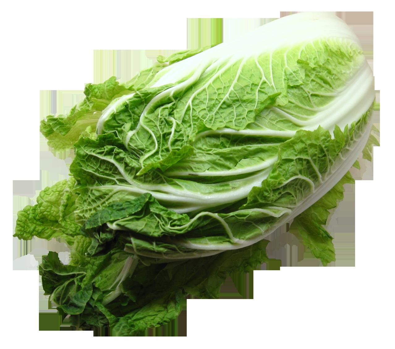 Napa Cabbage
