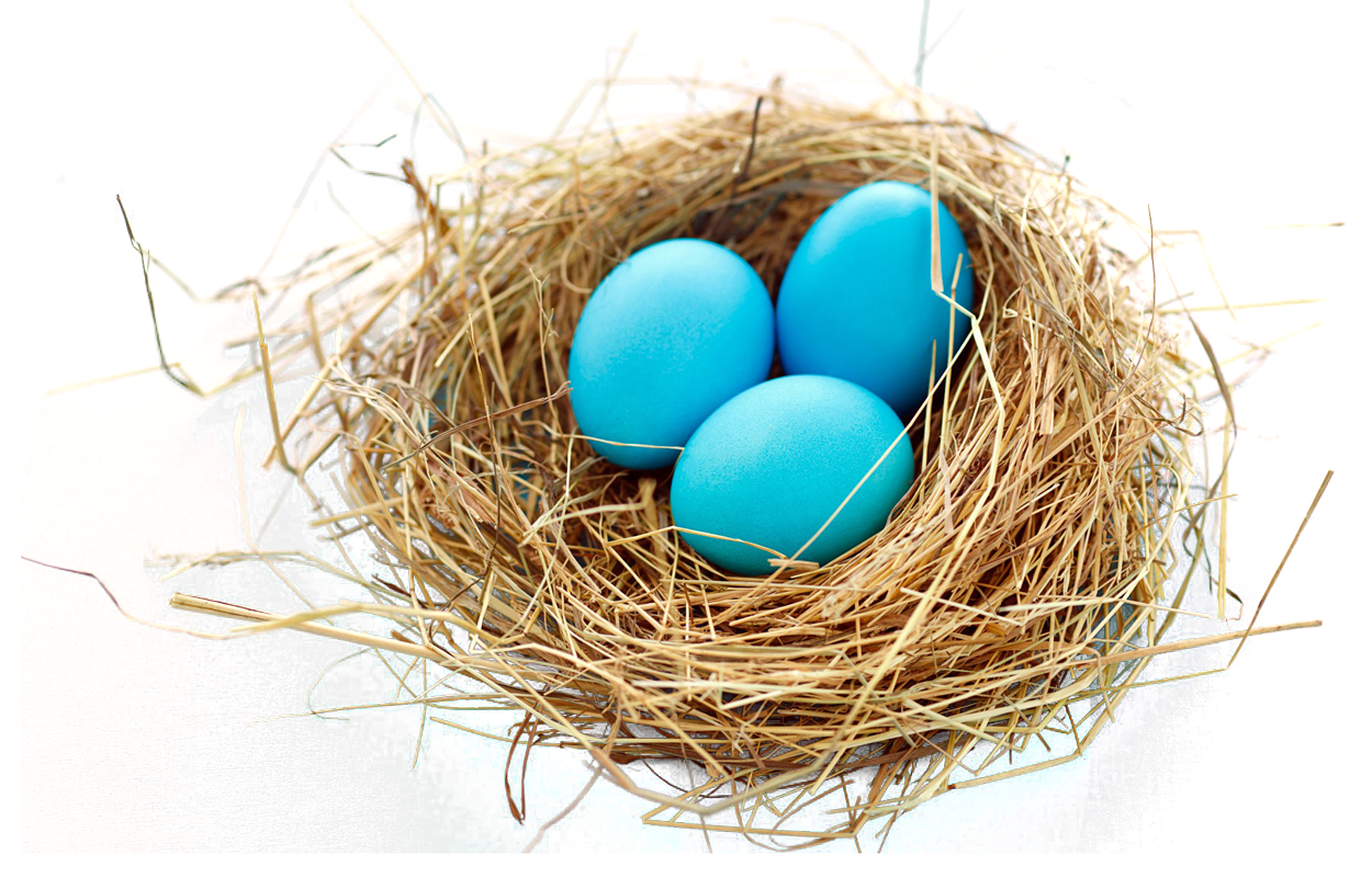 Nest PNG Image