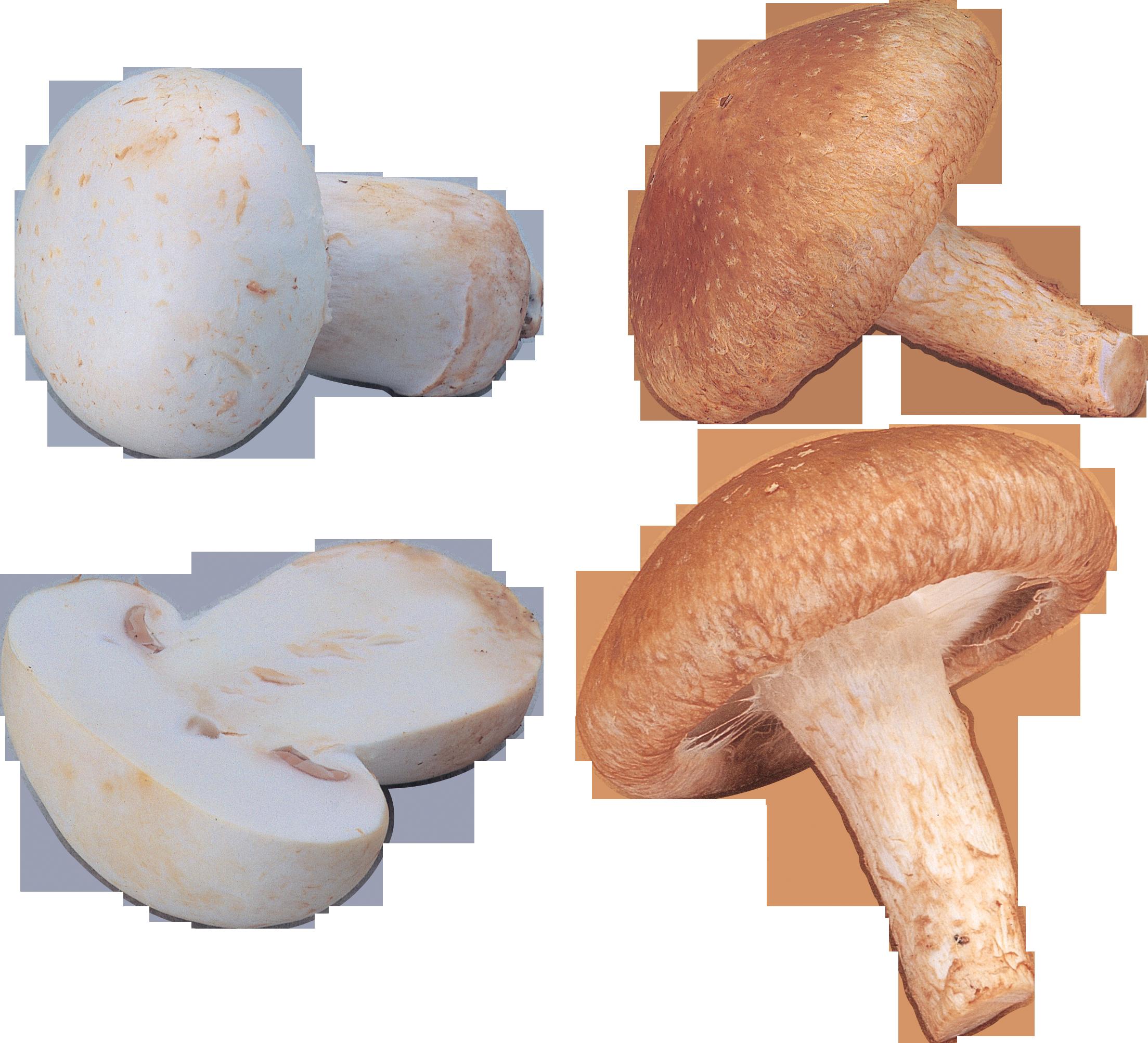 orange and white Mushrooms PNG Image