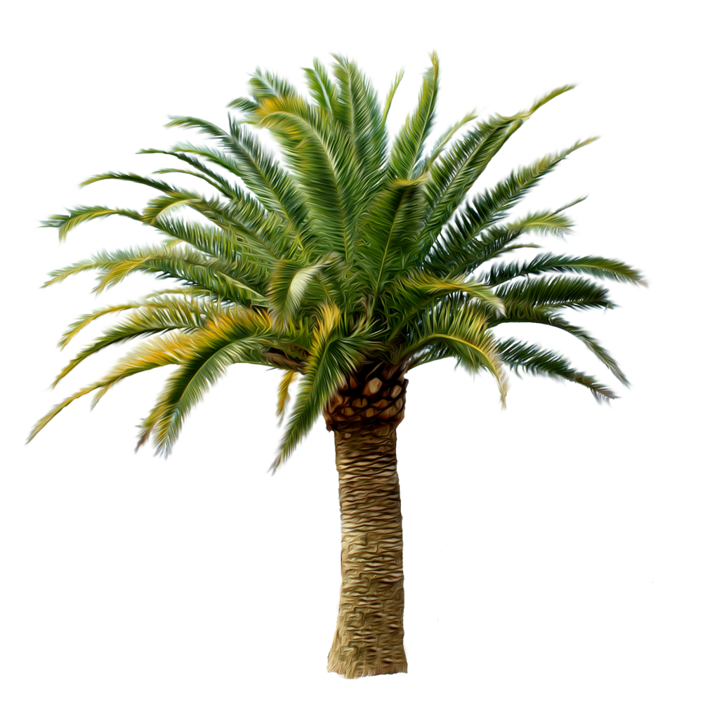 Palm Tree PNG Image