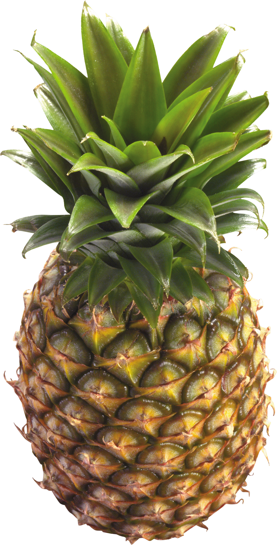 Pineapple PNG Image - PurePNG | Free transparent CC0 PNG ...
