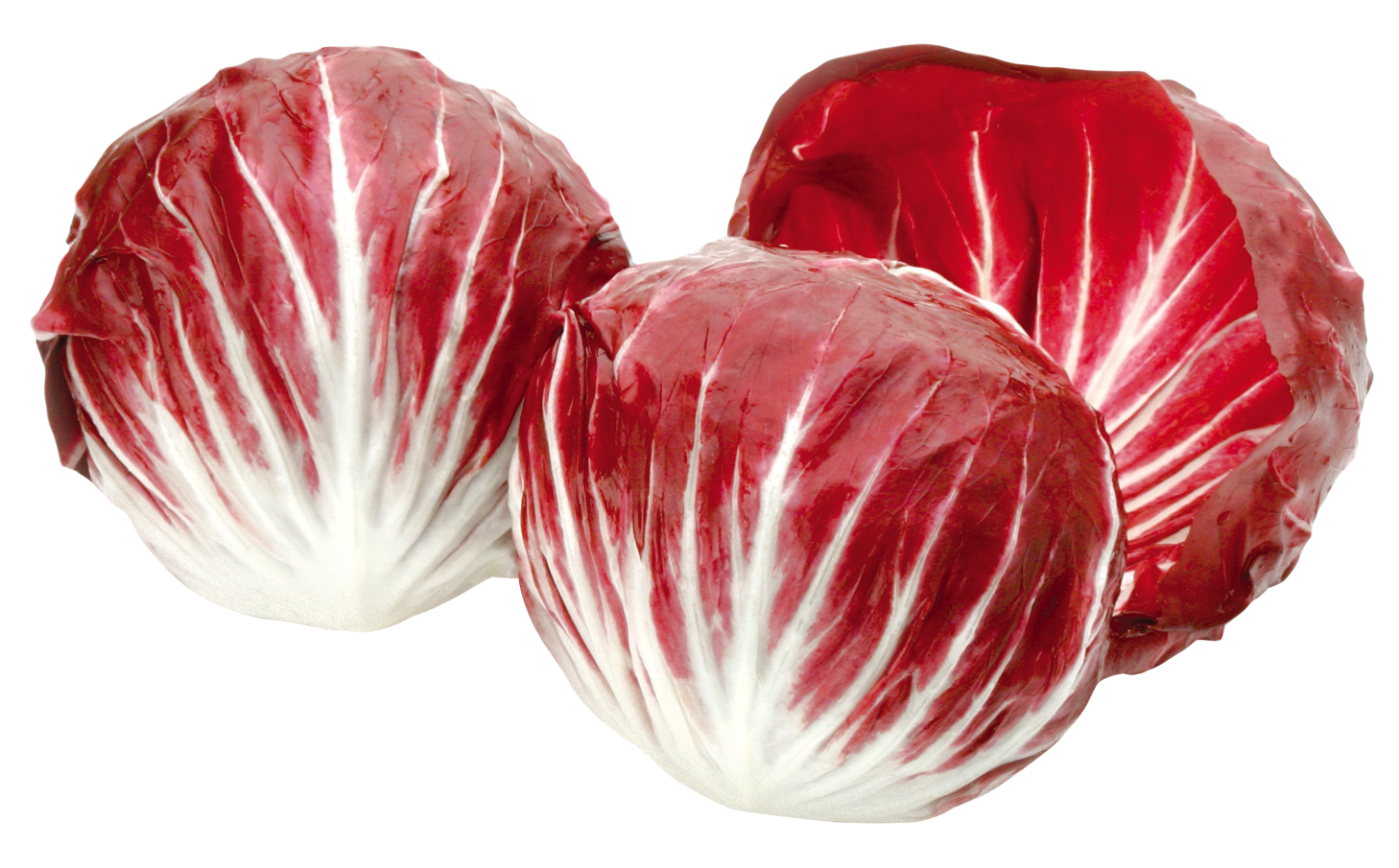 Radicchio,Red salad