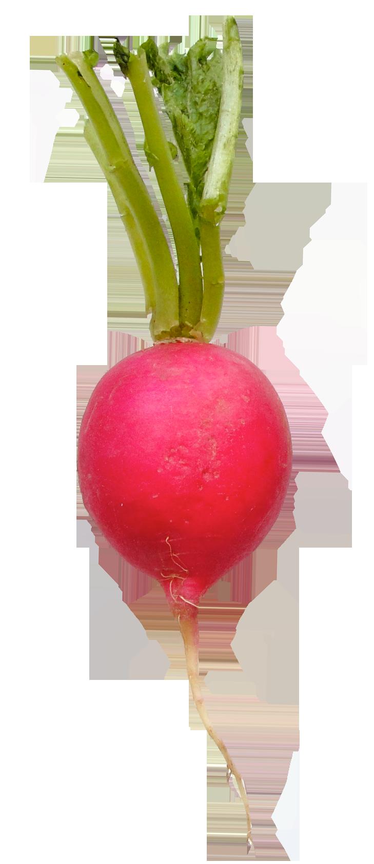 Radish PNG Image