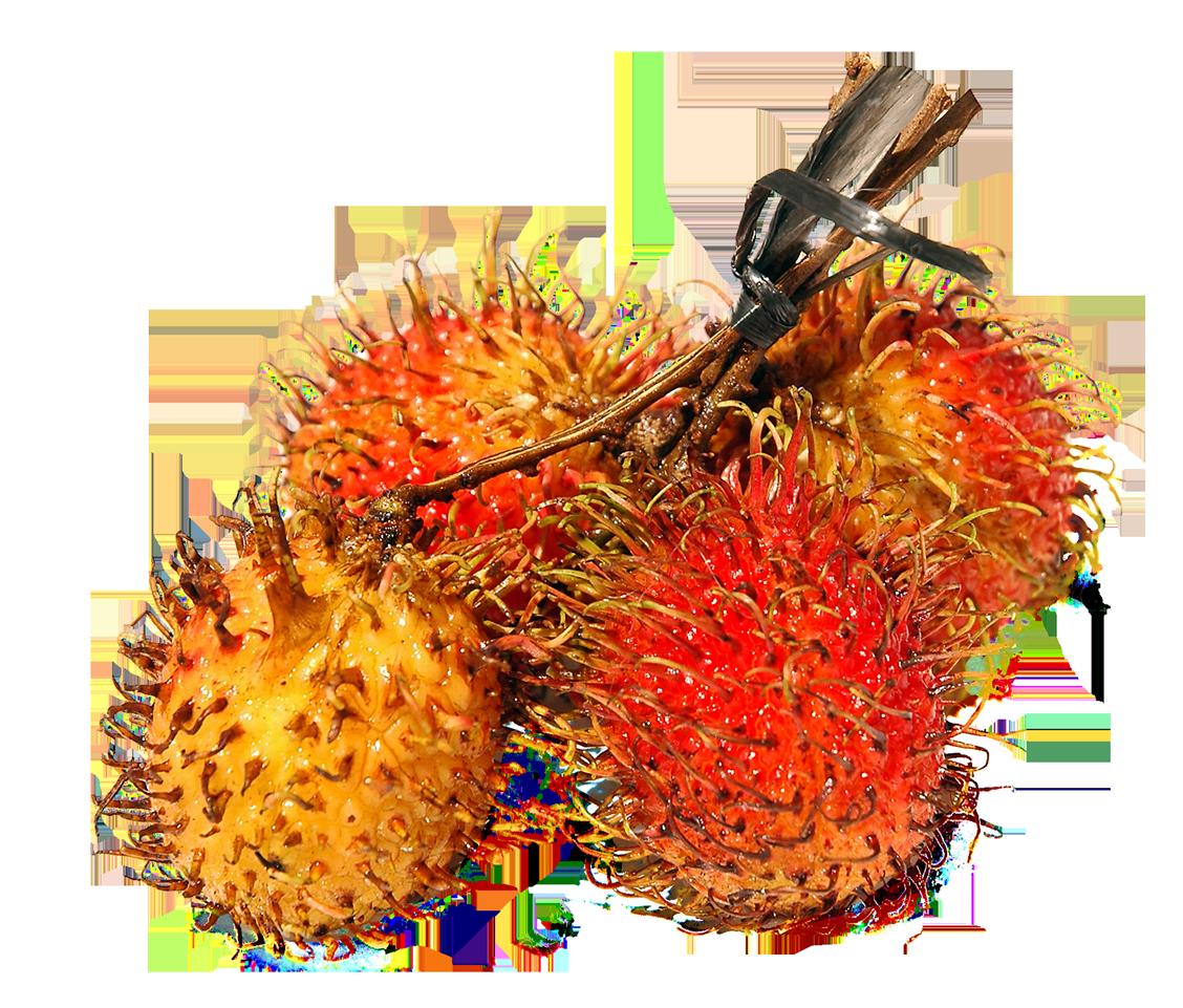 Rambutan PNG Image