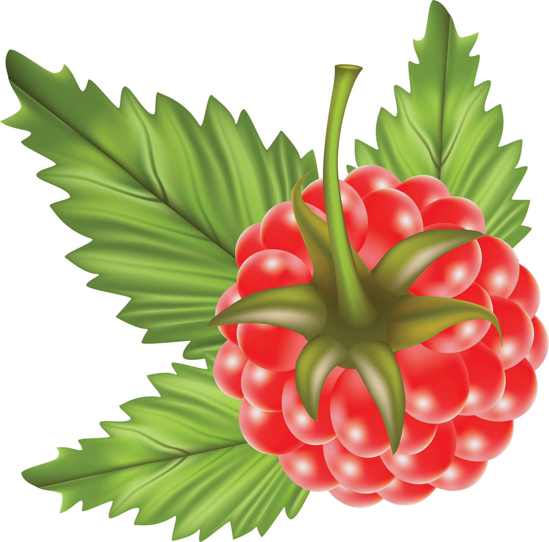 Raspberry PNG Image