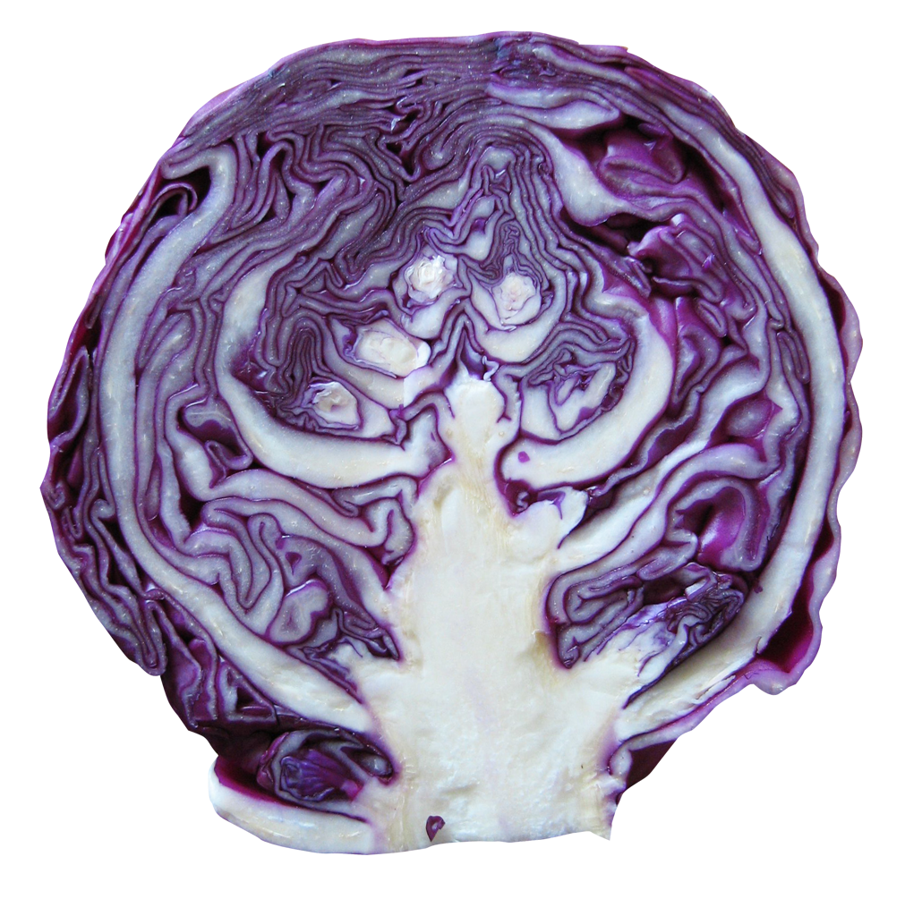 Red Cabbage PNG Image