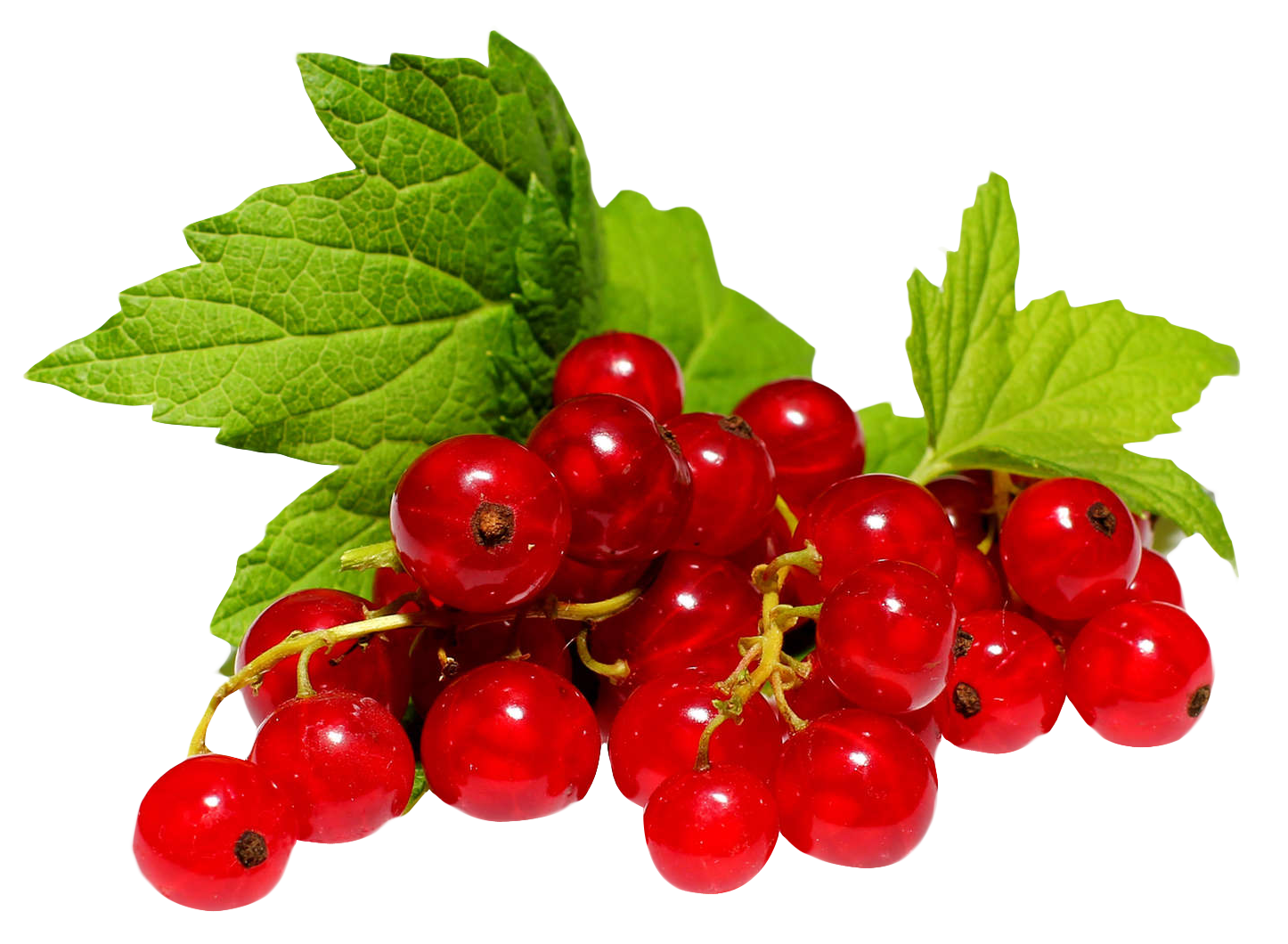 Redcurrant PNG Image
