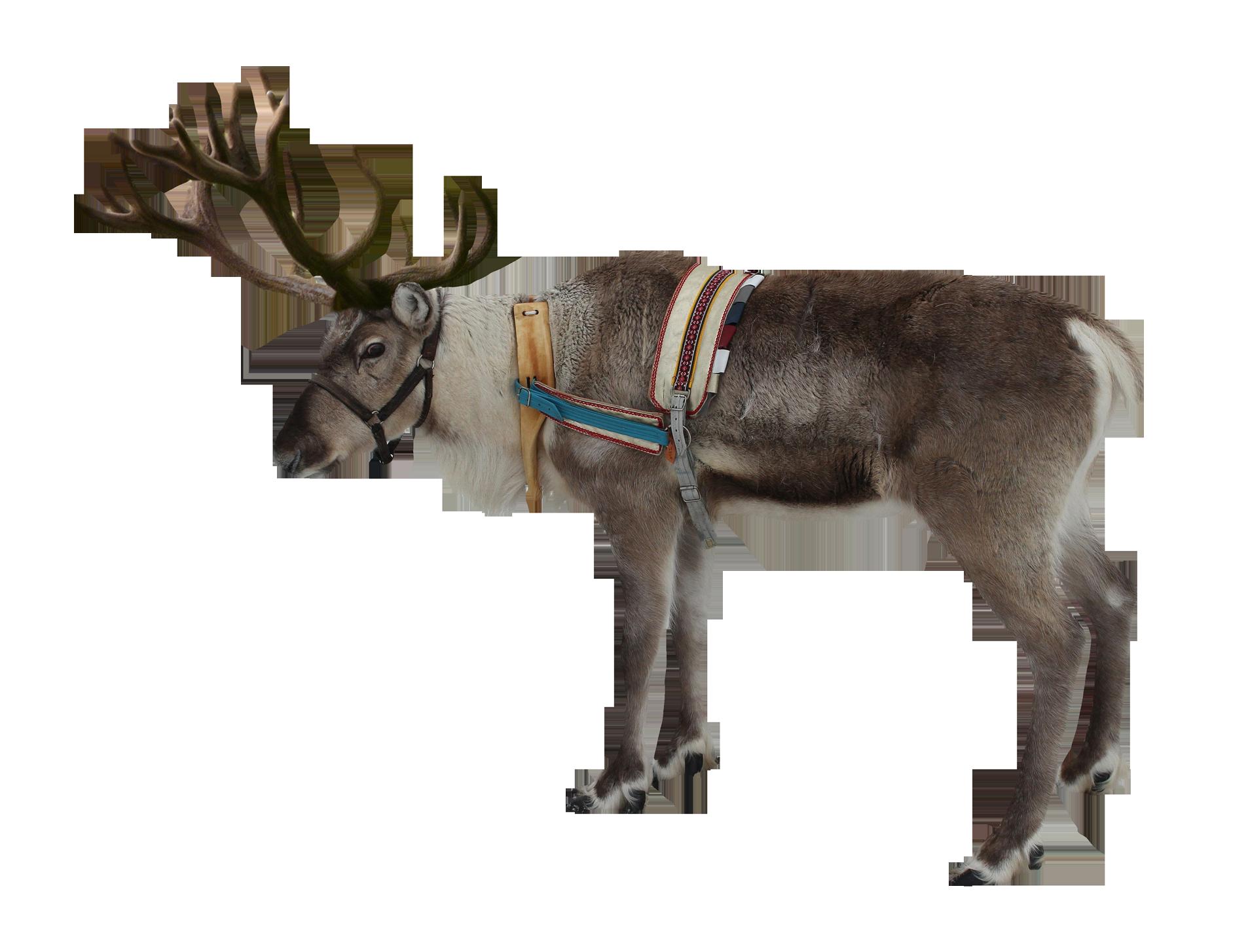 Reindeer PNG Image - PurePNG | Free transparent CC0 PNG ...
