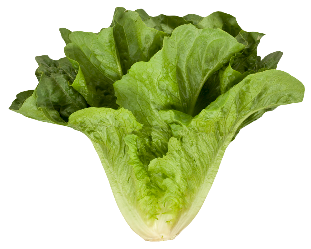 Romaine Cos Lettuce