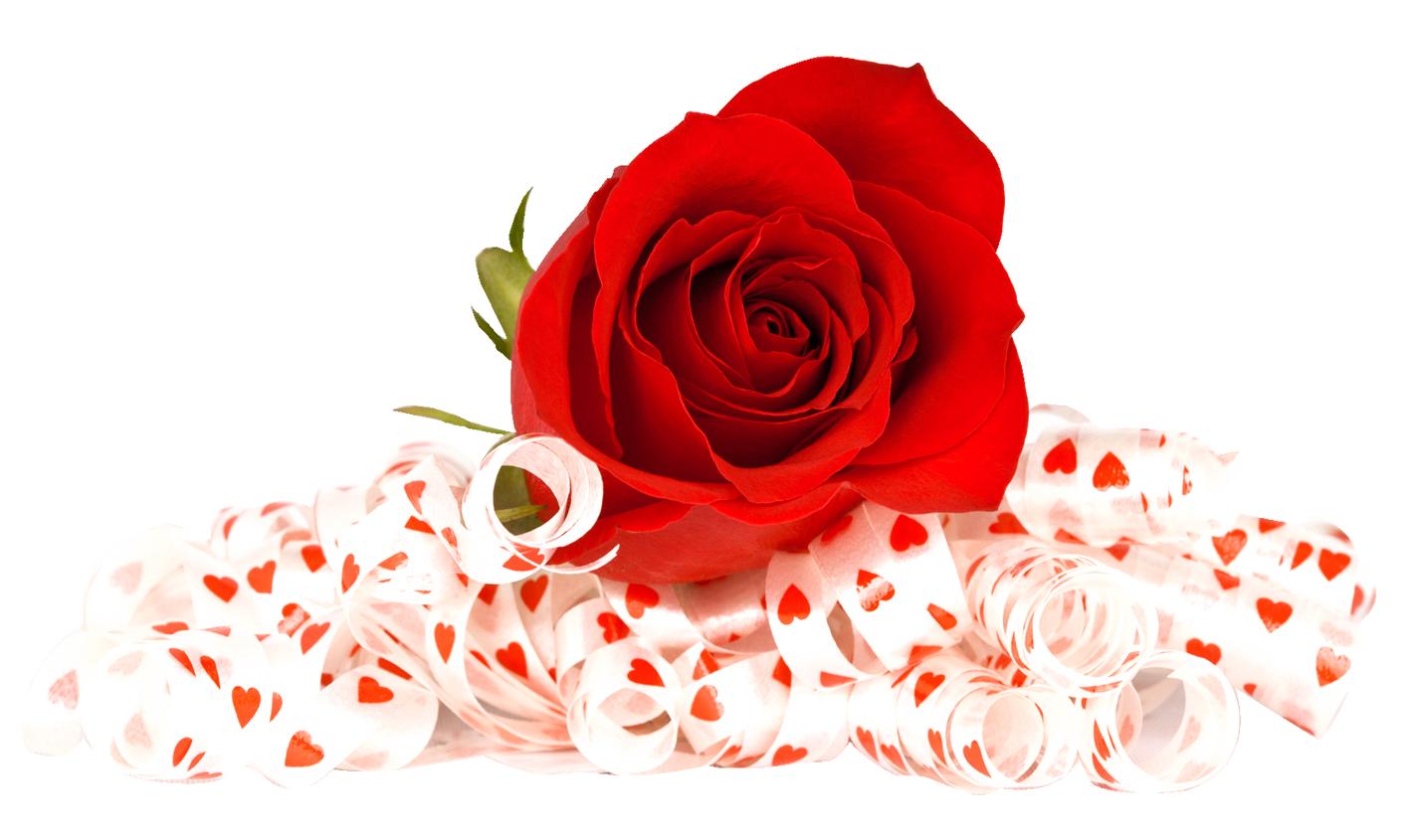 Rose Png Image Purepng Free Transparent Cc0 Png Image Library