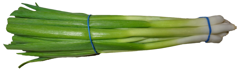 Scallion Green Onion