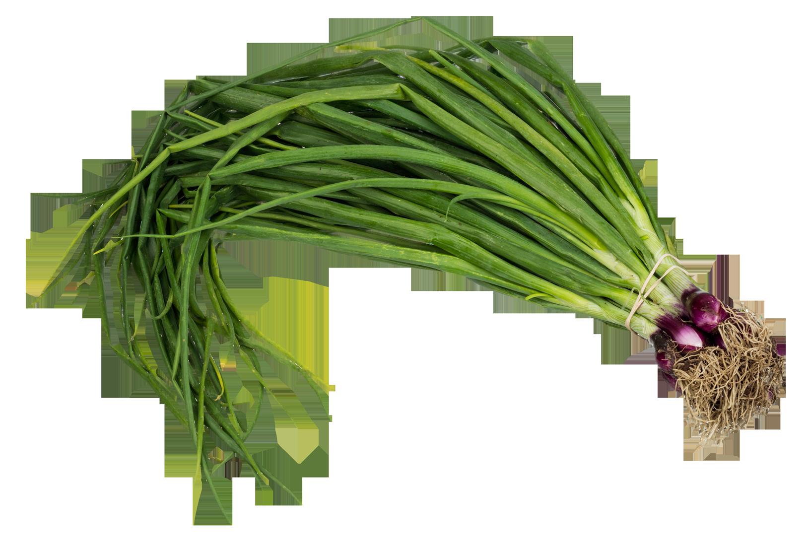 Scallion Spring Onion