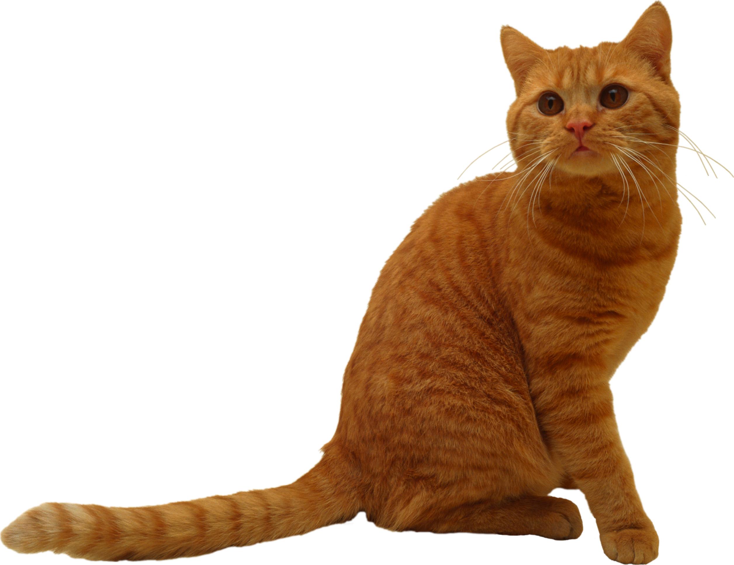 Sitting Cat PNG Image - PurePNG | Free transparent CC0 PNG ...