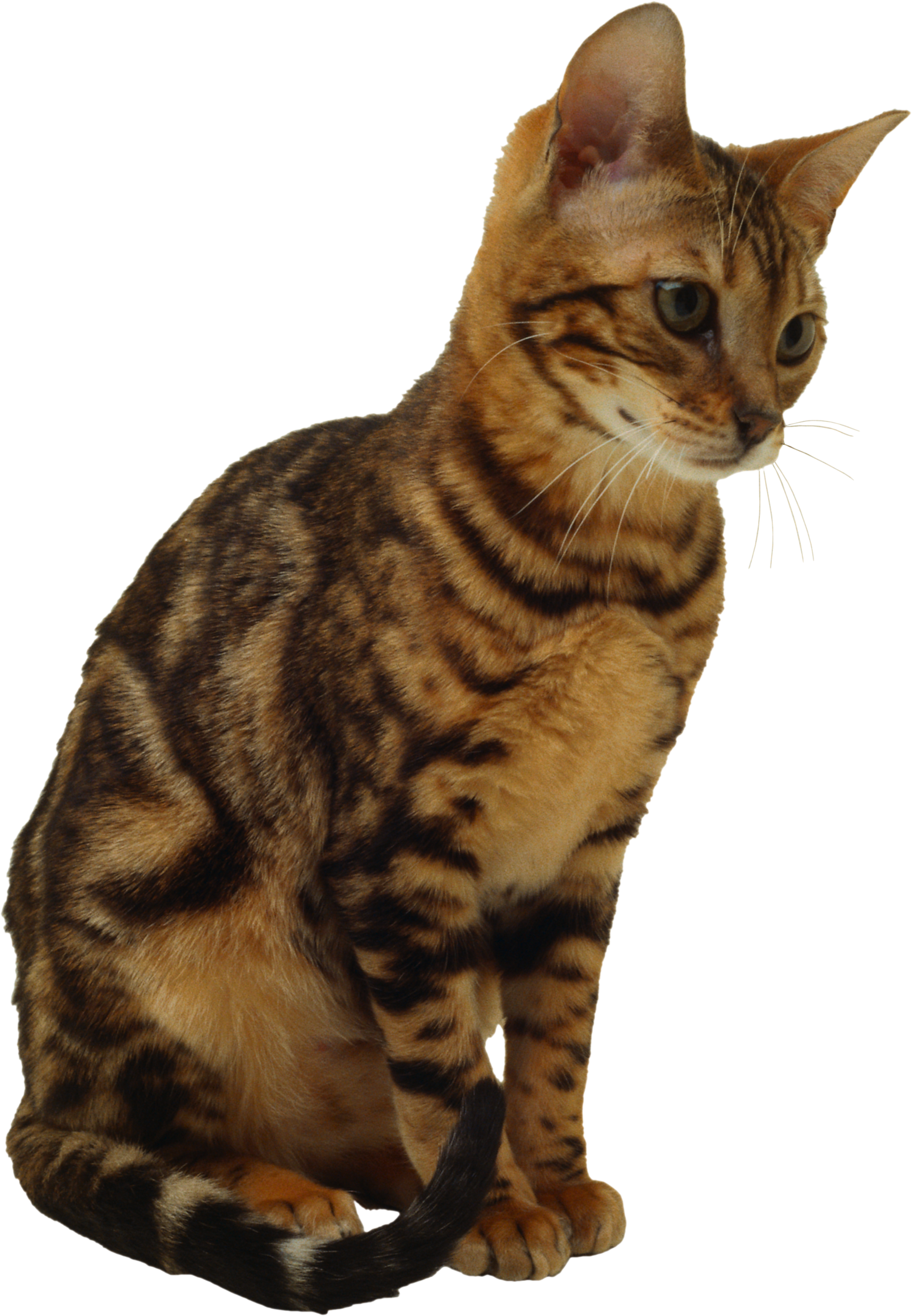 Sitting Cat PNG Image , PurePNG