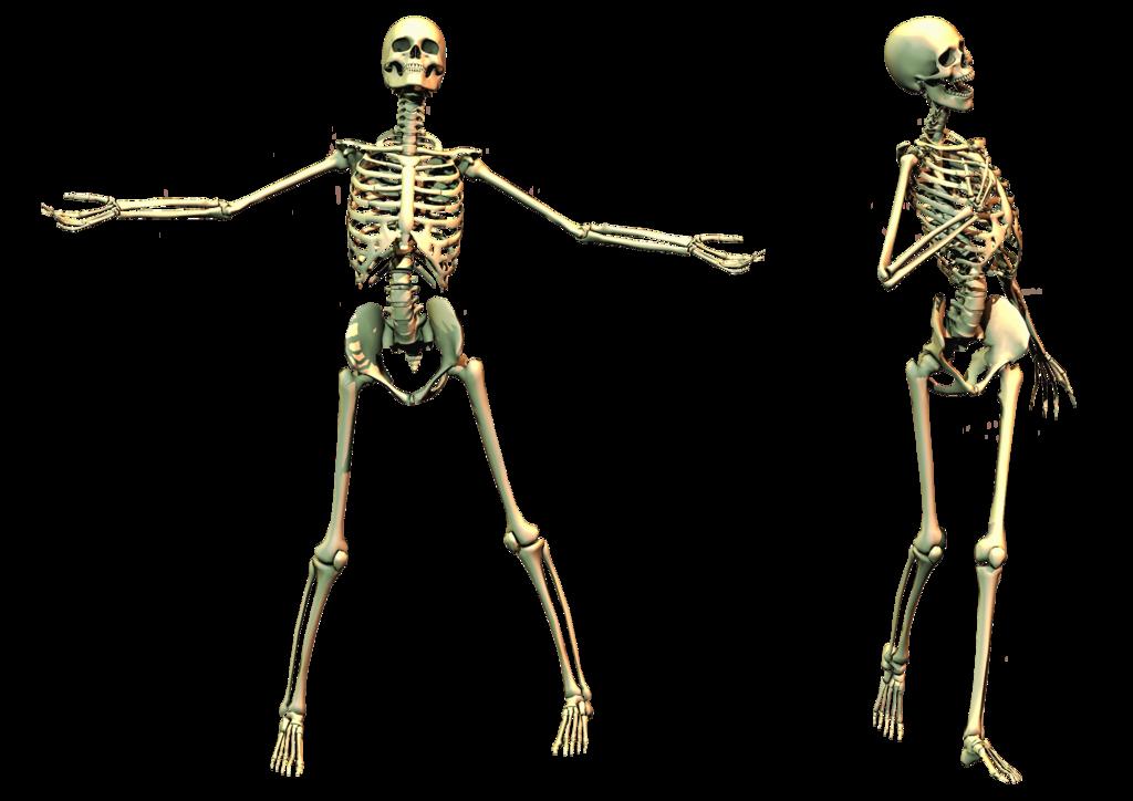Skeleton, Skull PNG Image