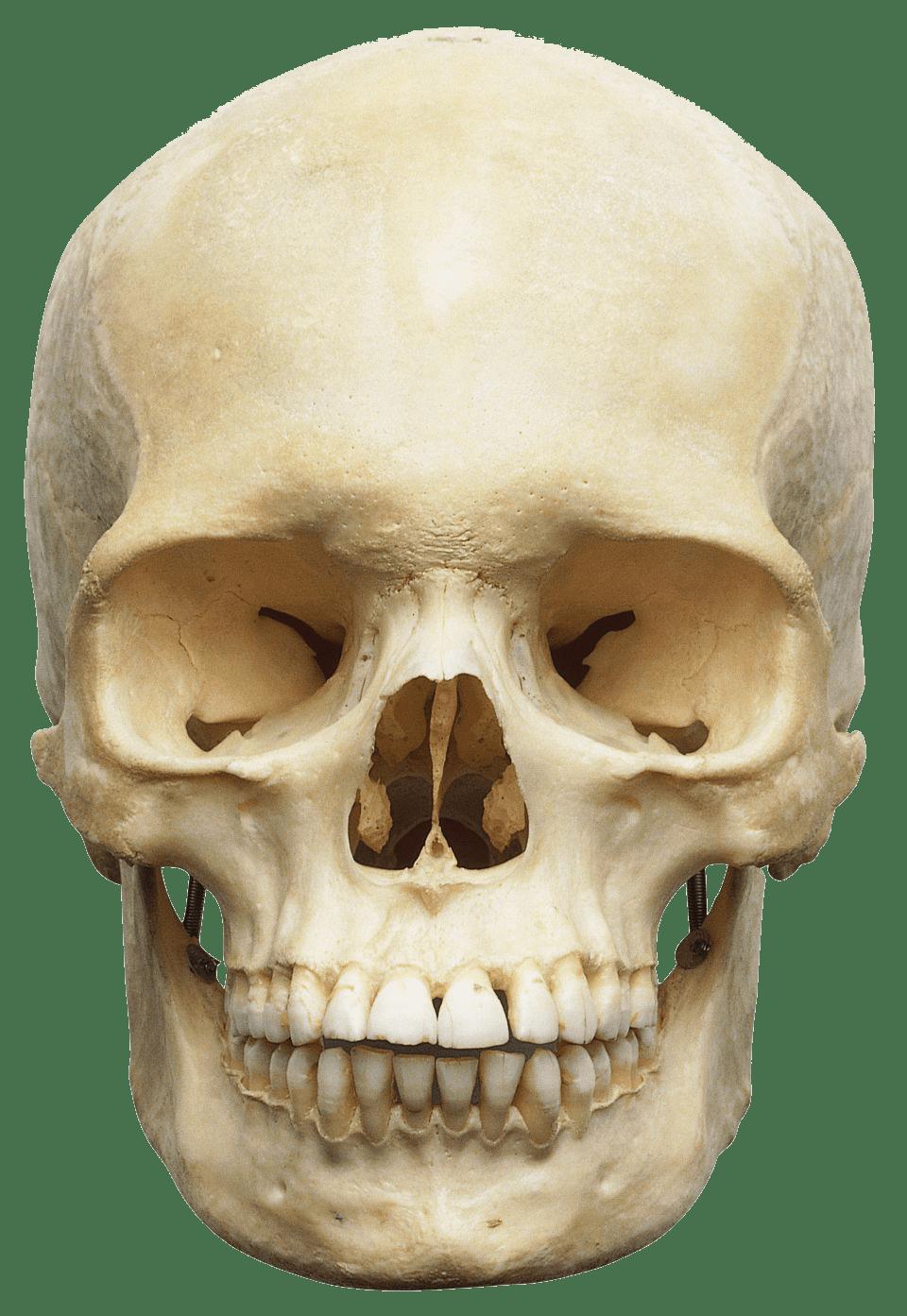 Skull PNG Image