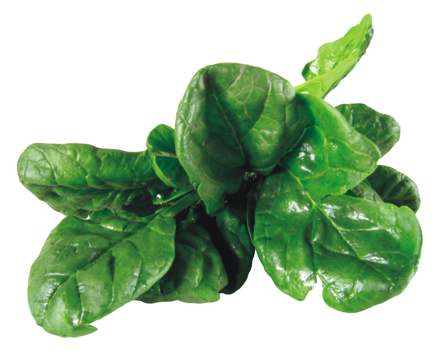 Spinach PNG Image