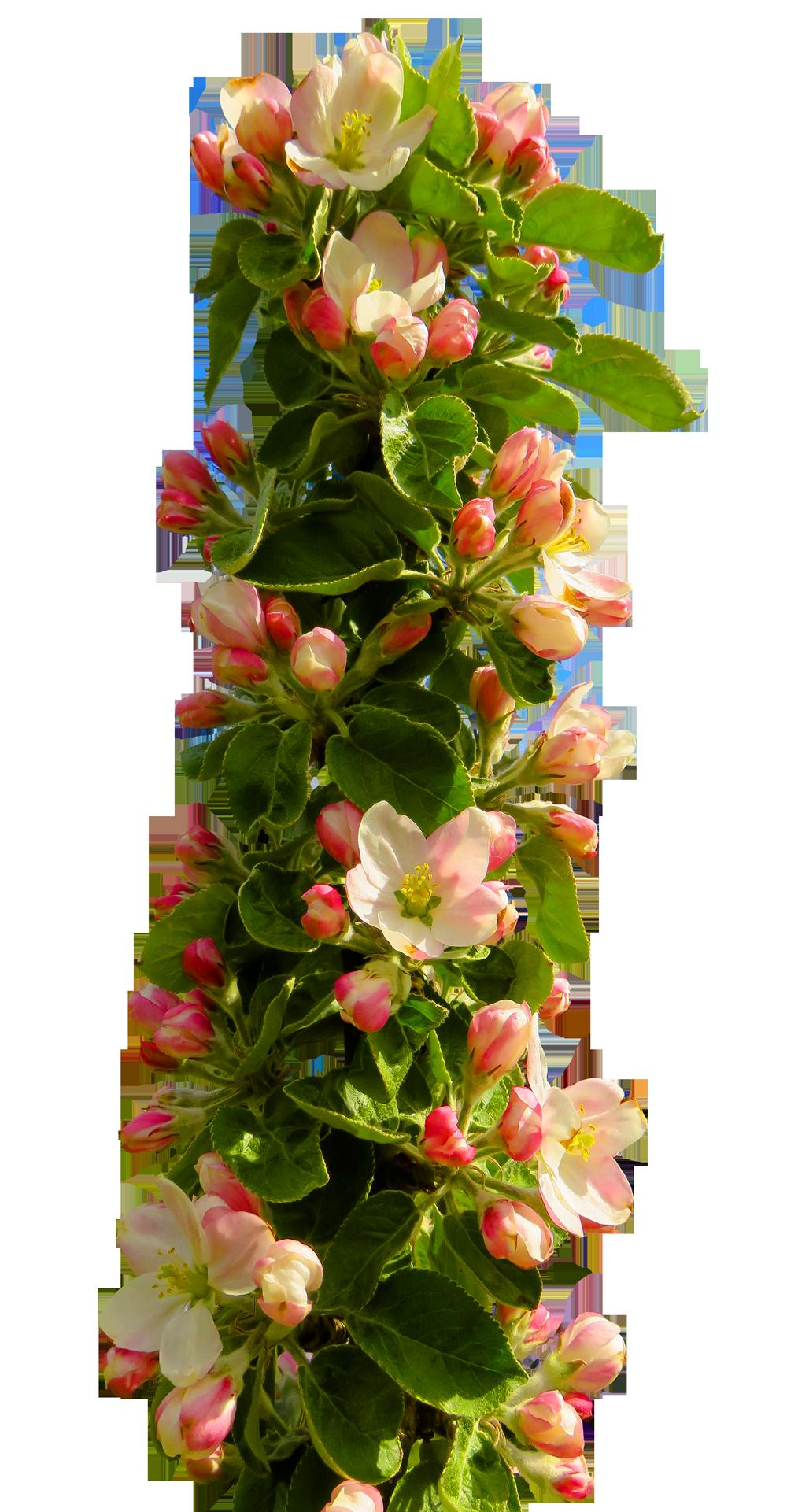 Spring Flower Png Image Purepng Free Transparent Cc0 Png Image