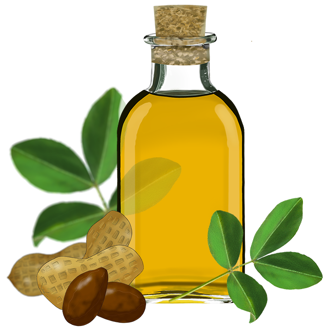 Sunflower Oil Clipart with Nuts PNG Image - PurePNG | Free ...