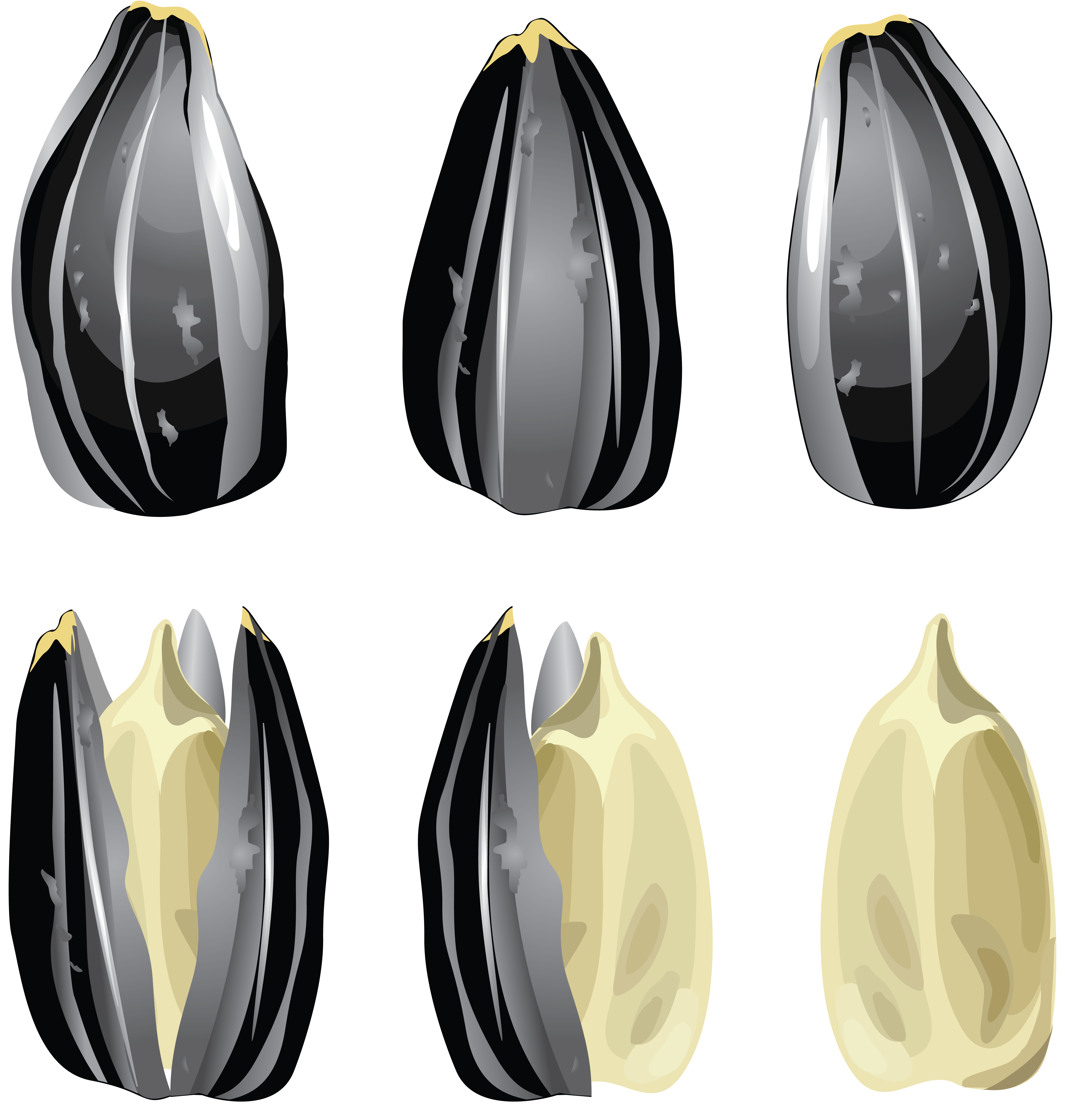 Sunflower Seeds PNG Image
