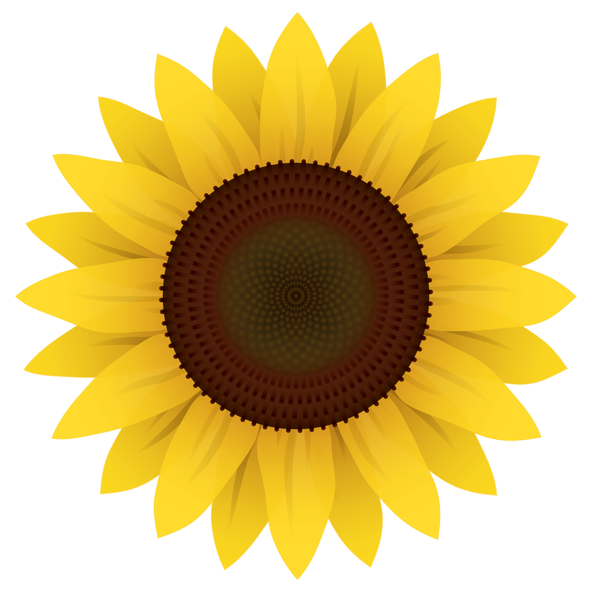 Sunflower Vector PNG Image - PurePNG | Free transparent ...