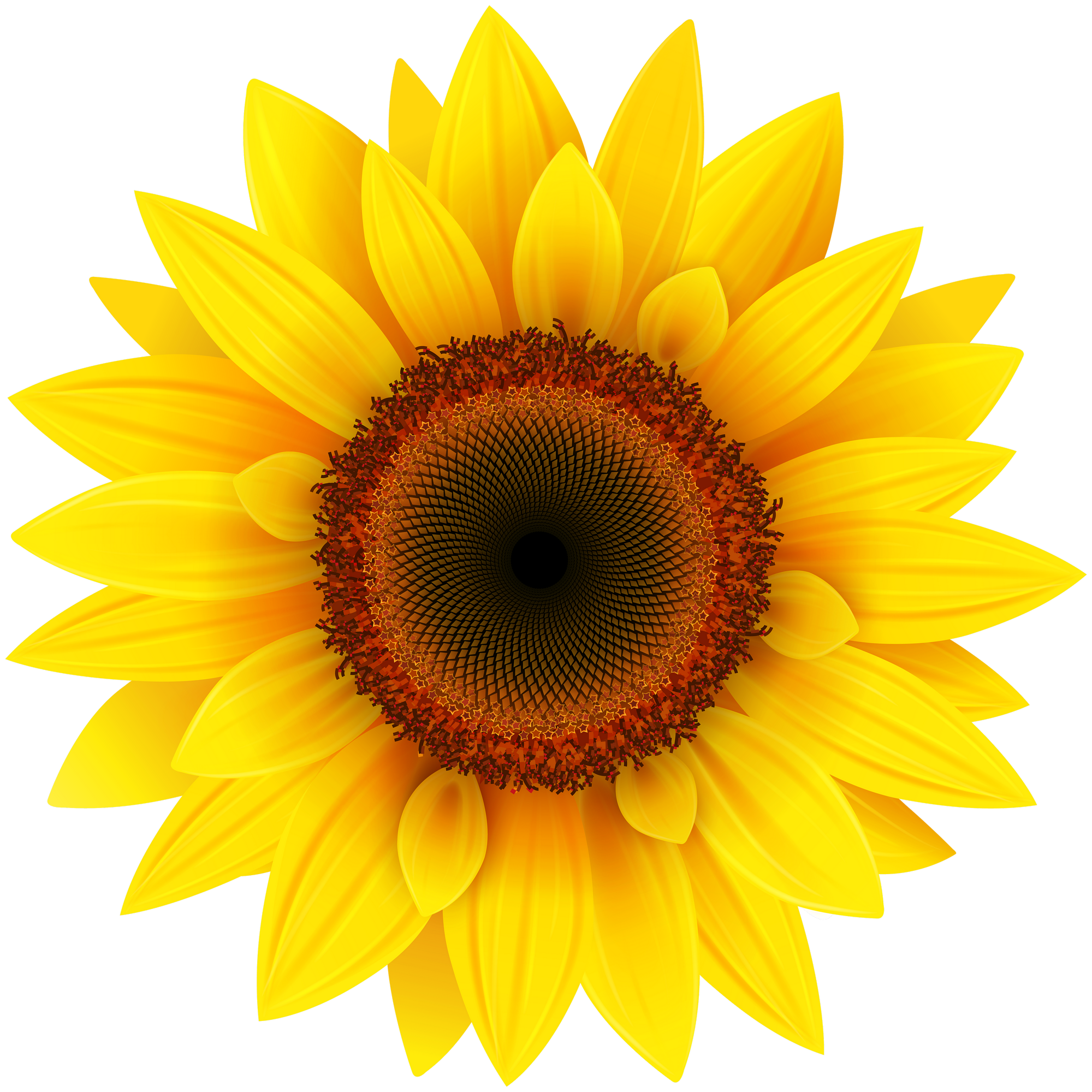 Sunflower PNG Image - PurePNG | Free transparent CC0 PNG ...