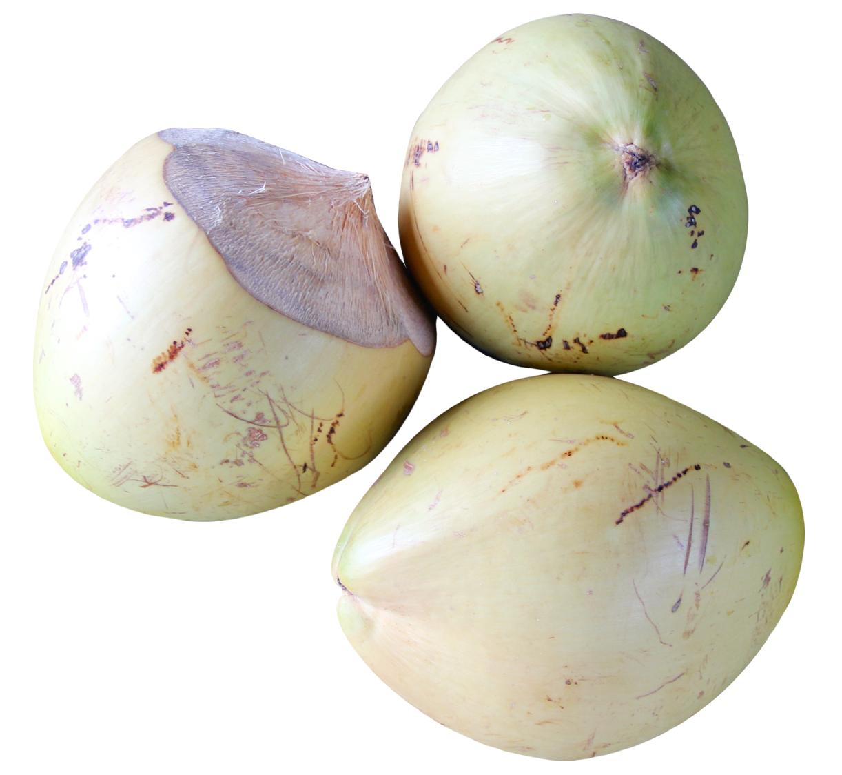 Top View of Coconut PNG Image