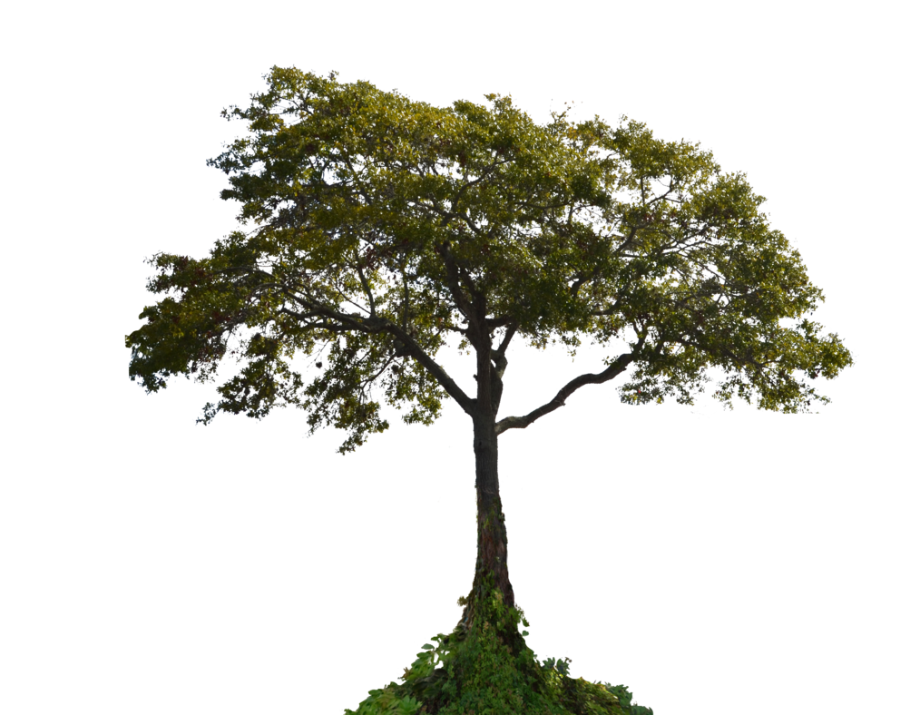 Tree with Plants PNG Image