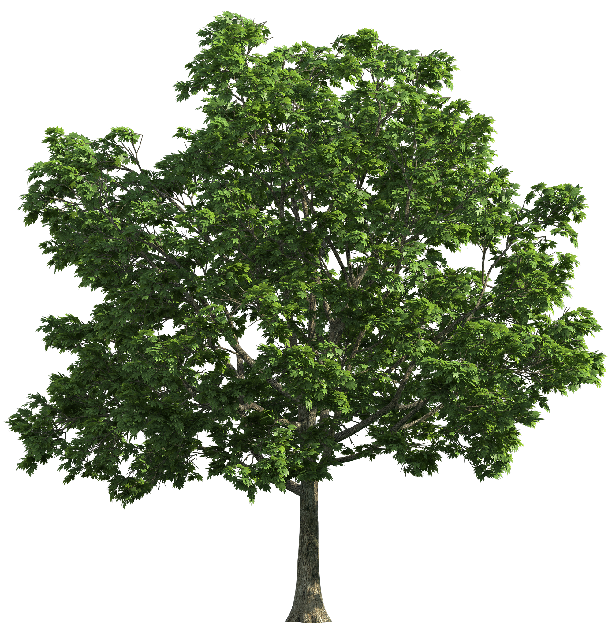 Tree PNG Image - PurePNG | Free transparent CC0 PNG Image Library