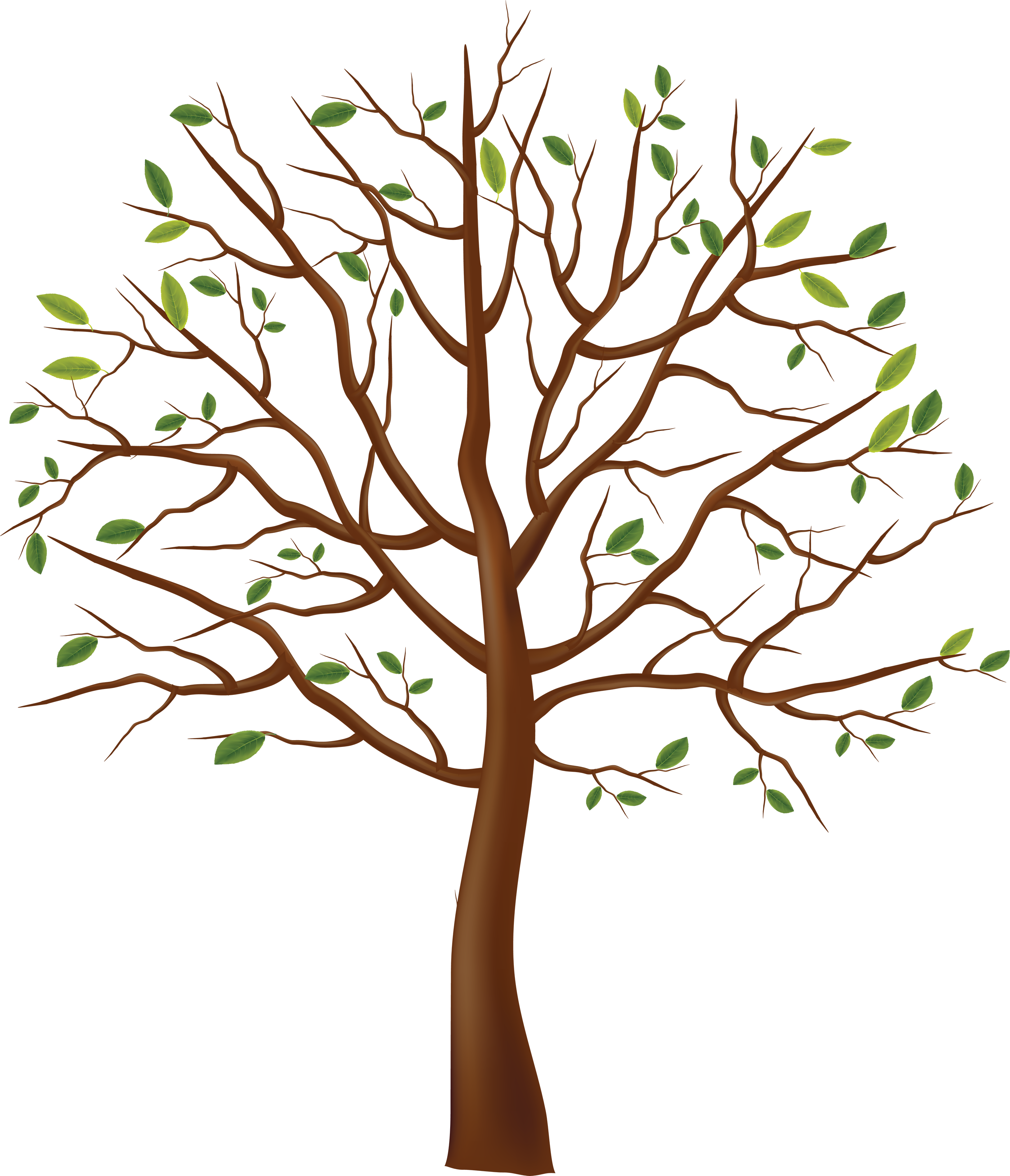Little Leaves Tree PNG Image