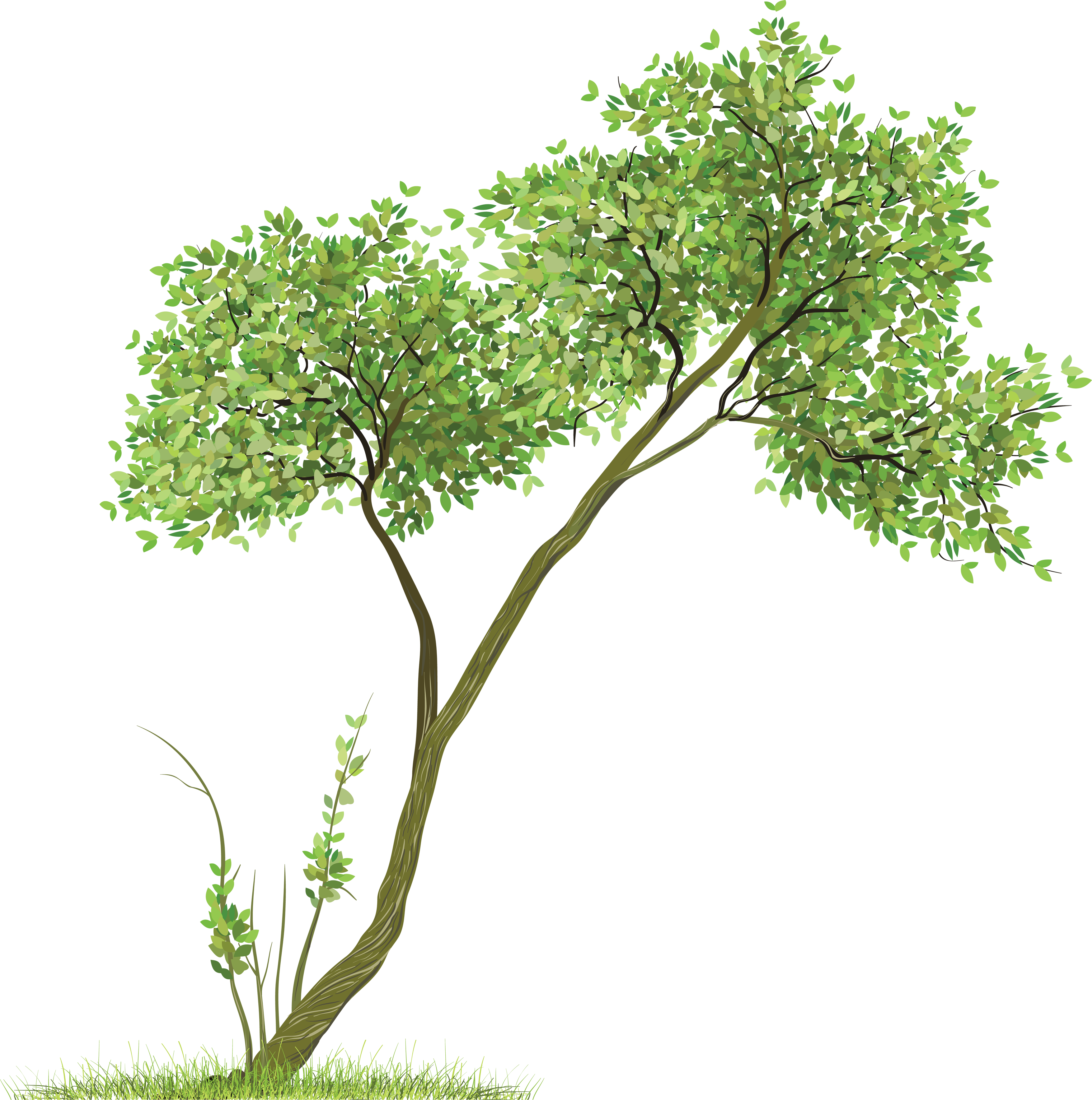 Leafy Tree with Grass PNG Image
