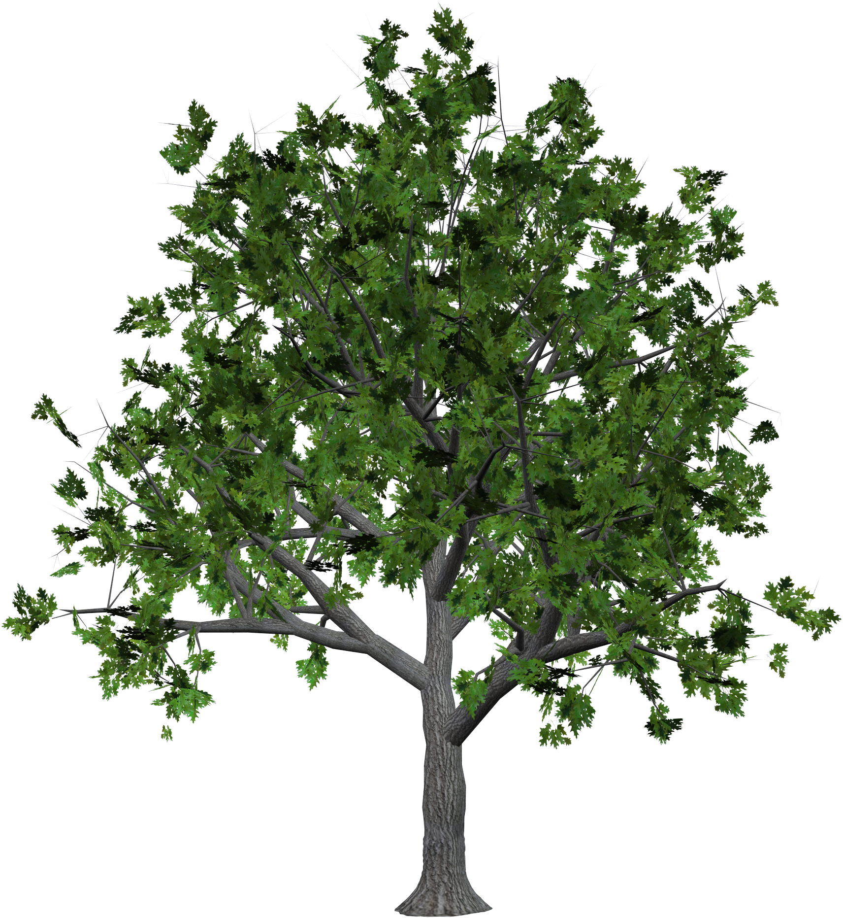 Wood Tree with Leaves PNG Image