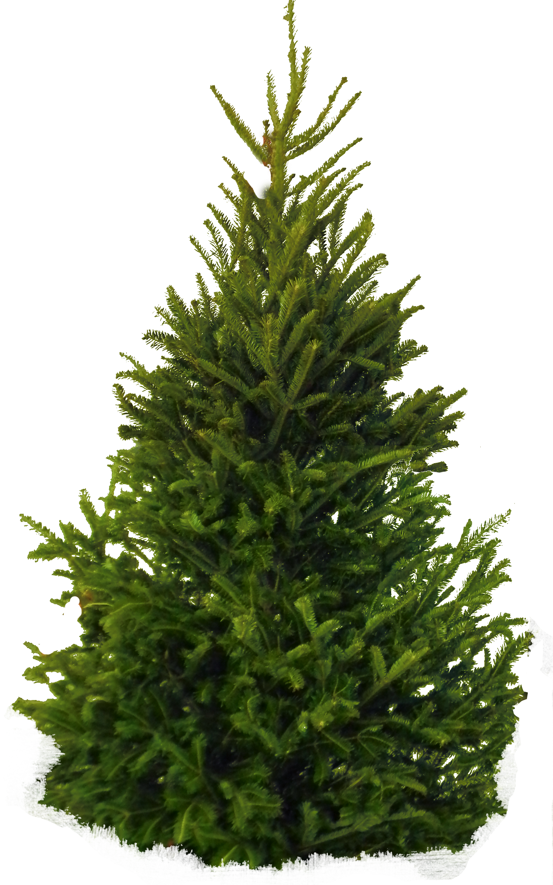 Fir Tree PNG Image